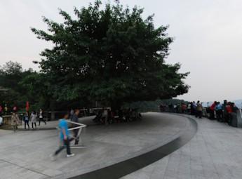 重庆一棵树