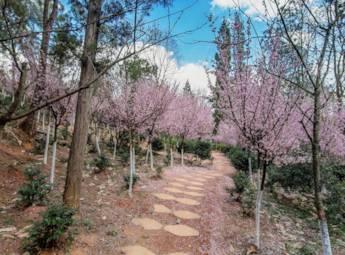云南郊野公园