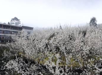 成都蒲江櫻桃山