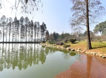 武汉东湖磨山梅园