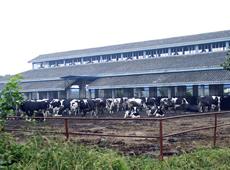 荷斯坦奶農俱樂部
