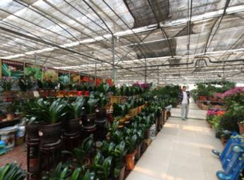 郑州陈砦花卉交易市场