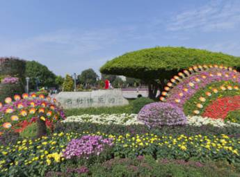 2013第二届广西南湖菊花展