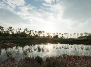云南斗南滇池湿地