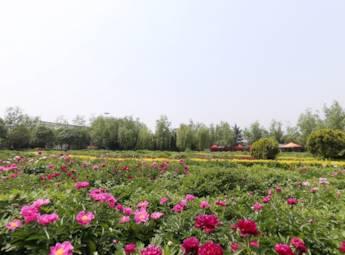 洛阳国花园