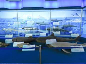 北海市海底大世界