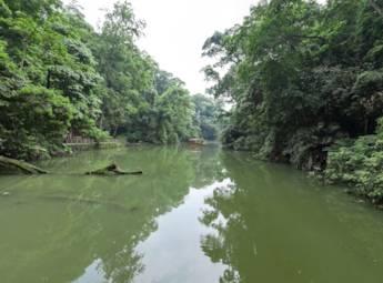 三明格氏栲国家森林公园