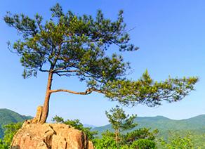江西三百山景区
