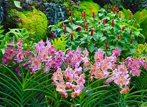 新加坡国家胡姬园